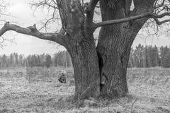 image monochrome Chêne antique sombre en premier ressort Photographie stock libre de droits