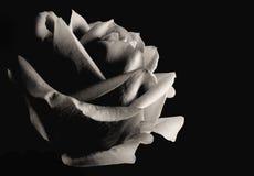 Image monotone d'une rose simple d'isolement sur un fond noir image libre de droits