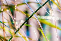 An Image of Morning Dew Stock Photography