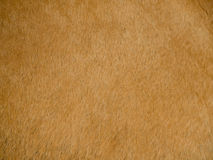 Image of natural animal leather Stock Image
