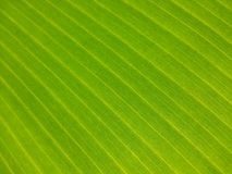 Nature Banana Paper Patterns of Sri Lanka Stock Photos