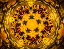 Deep Into the Vortex Bee Kaleidoscope vector illustration