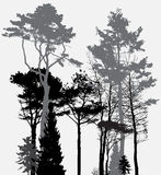 Image of Nature. Tree Silhouette. Eco banner. Vector Illustration Stock Photography