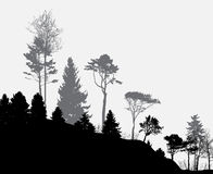 Image of Nature. Tree Silhouette. Eco banner Stock Photos