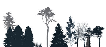 Image of Nature. Tree Silhouette. Eco banner. Vector Illustration Stock Images