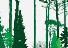 Image of Nature. Tree Silhouette. Eco banner. Vector Illustration Stock Image
