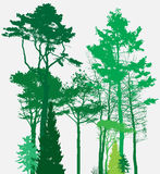 Image of Nature. Tree Silhouette. Eco banner. Vector Illustration Stock Photos