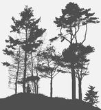 Image of Nature. Tree Silhouette. Vector Stock Photos