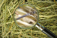 Image of needle in the hay close up Stock Photo