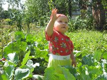 The kid in cabbage Royalty Free Stock Photography