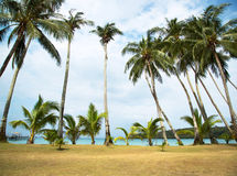 An image of nice palm trees Stock Photography