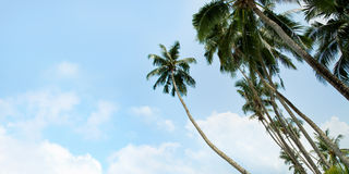 An image of nice palm trees Royalty Free Stock Photos