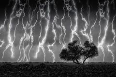 Image noire et blanche d'arbre entre la tempête images libres de droits