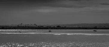 Image noire et blanche d'estuaire déprimé avec des oiseaux photographie stock