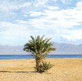 Image of an oasis with water and a palmtree Royalty Free Stock Image