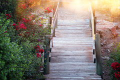 Free Image Of Dreamy Old Woods Stairs In The Woods Royalty Free Stock Photo - 91579465