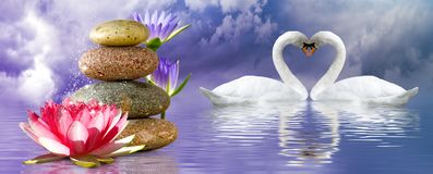 Free Image Of Lotus Flower, Stones And Swans In The Park Close Up Royalty Free Stock Image - 152678126