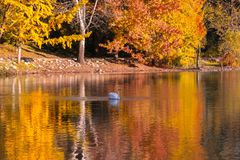 Free Image Of The Lake And Swans On A Background Stock Photography - 154214202