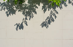 Free Image Of Tree Leaf Shadow On Wall Stock Images - 45187254
