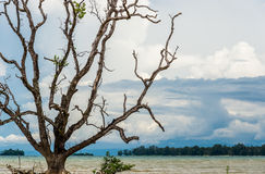 Image of an old big tree with sea in background Stock Photos