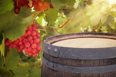 Image of old oak wine barrel in front of wine yard landscape. Useful for product display montage. Royalty Free Stock Photo