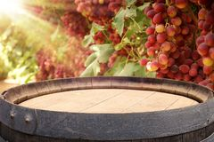 Image of old oak wine barrel in front of wine yard landscape. Useful for product display montage. Stock Photo