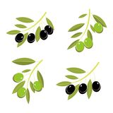 Vector image of olive branches with black and green olives royalty free stock image