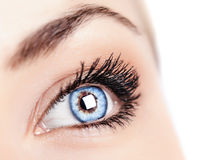 Female blue eye royalty free stock image