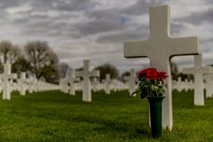 Image of one cross with a vase with red roses in the American Cemetery Margraten royalty free stock photography
