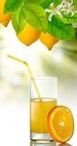 Image of orange� and orange juice closeup Stock Images
