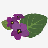 The ordinary gentle violet Royalty Free Stock Photo