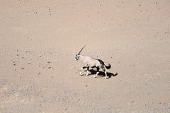 Oryx in Namibia Stock Photos