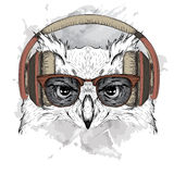 The image of the owl in the glasses and headphones. Vector illustration. Stock Images