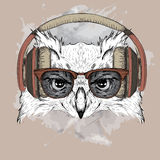 The image of the owl in the glasses and headphones. Vector illustration. Stock Image