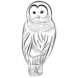 Image of the owl imitates drawing with pen and ink. Stock Image