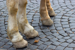 Image with pair of white horse hooves on a block pavement. Stock Images