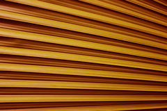 Image of palm leaf Royalty Free Stock Images
