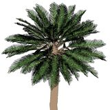 Image of palm tree Royalty Free Stock Photography