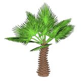 Image of palm tree Stock Photography