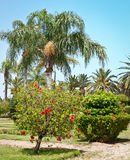 Image of a palm tree park . Royalty Free Stock Image
