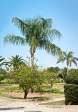 Image of a palm tree park . Stock Photo