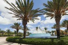 Image of palm trees around a water fountain. Stock Images