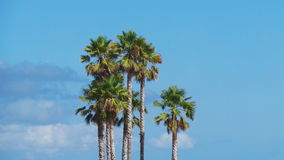 Image with palm trees on the beach with a view and cloudless blue sky Royalty Free Stock Image