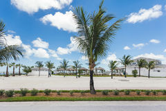Image of palm trees in a vacation resort. Stock Images