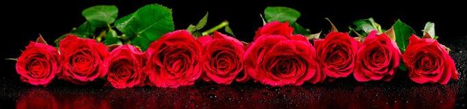 Image panoramique des roses rouges avec des baisses de rosée photos stock
