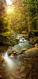 Image panoramique du ruisseau de forêt dans les montagnes Image stock