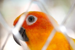 Image of parrot Royalty Free Stock Image