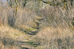 Path in a thicket of an abandoned park Royalty Free Stock Image