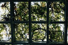 Through the pergola garden covered with green foliage and backli Royalty Free Stock Images