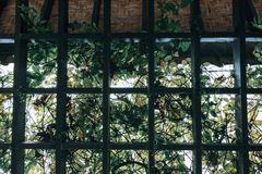 Through the pergola garden covered with green foliage and backli Royalty Free Stock Photo